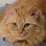 Profile picture of cncamacho