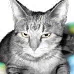 Profile picture of henri0